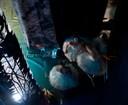 """<p style=""""text-align: center; """"><span style=""""font-weight: bold; """">'El lago de los cisnes'</span><br /> Ballet Imperial Ruso<br /> Coreografía: Gediminas Taranda<br /> Teatro Gran Vía de Madrid<br /> 2010</p>"""